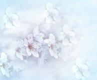 Мягкий фокус на цветя ветви - красивой природе Стоковые Изображения