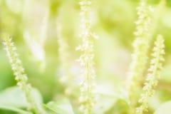Мягкий фокус немногое предпосылка природы весны зеленого цвета и белых цветка Стоковое фото RF