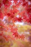 Мягкое изображение осенних листьев Стоковое Изображение