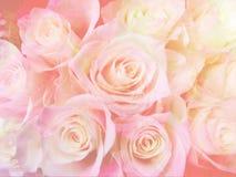 Мягкое backgroundd роз Стоковое Изображение