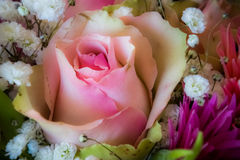 Мягко предпосылка розы пинка стоковое фото