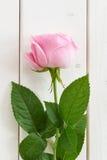 Мягко роза пинка на белой древесине Стоковое фото RF