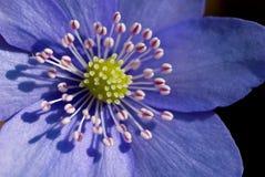 Мягк фиолет стоковое фото