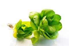 2 мясистых листь шпината Стоковое Фото