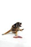 мясо собаки Стоковая Фотография RF