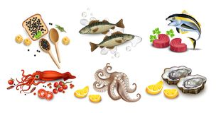 Мясо тунца, икра, кальмар, устрицы и комплект морепродуктов осьминога Иллюстрации вектора реалистические детальные бесплатная иллюстрация