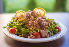 Мясо тунца с зеленым салатом и томатами Стоковое Фото