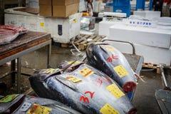 Мясо тунца Стоковое Фото