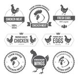 Мясо цыпленка и яичка 1 иллюстрация штока