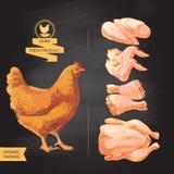 мясо цыпленка свежее иллюстрация вектора
