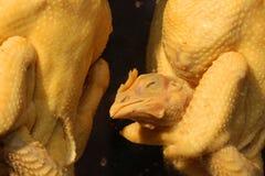 Мясо цыпленка Стоковые Изображения