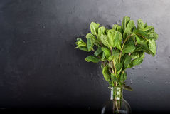 Мята ветви в бутылке на черной предпосылке Стоковые Изображения