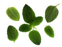 мята листьев Стоковые Фото