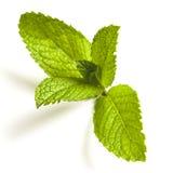 мята листьев Стоковая Фотография RF