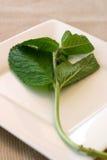 мята листьев стоковые фотографии rf