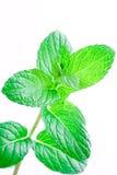 мята листьев Стоковое Изображение RF