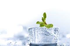 мята льда Стоковое Изображение