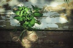 Мята пачки Стоковая Фотография