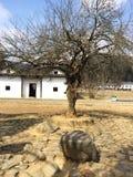 Мята Цзянси стоковые изображения rf