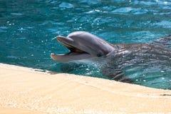 Младенец дельфина Стоковые Изображения