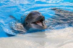 Младенец дельфина Стоковые Изображения RF