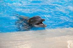 Младенец дельфина Стоковая Фотография