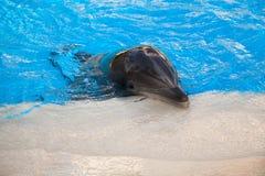 Младенец дельфина Стоковое фото RF