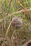 Младенец мыши Джека Стоковая Фотография RF