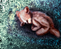 Младенец foxy Стоковое Изображение