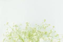 Младенц-дыхание цветет, освещает, воздушные массы малых белых цветков Стоковое Изображение RF