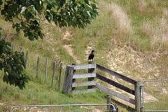 Наблюдательная утка фермы стоковые изображения