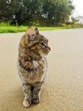 наблюдатель кота Стоковые Изображения RF