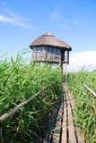 наблюдать башни птицы Стоковое Изображение RF