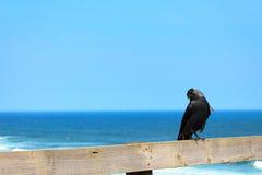 Наблюдать ворона Стоковое Изображение RF