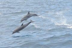 Наблюдать дельфина Стоковое фото RF