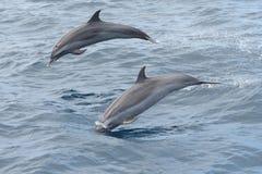 Наблюдать дельфина Стоковое Изображение RF
