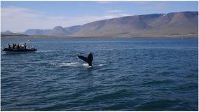 Наблюдать кита стоковая фотография