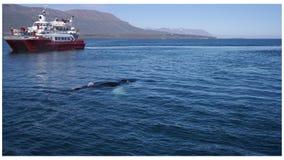 Наблюдать китов стоковое изображение rf