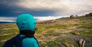 наблюдать колонию пингвинов стоковое фото