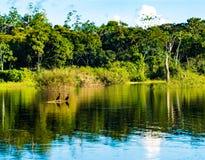 Наблюдать птиц от их острова в Амазонке на солнечный день стоковое изображение