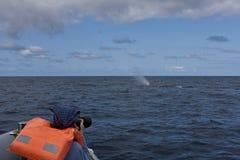 наблюдая кит Стоковые Изображения RF
