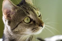 Наблюдая кот стоковое изображение rf