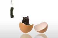 наблюдать телефона кота Стоковые Изображения