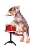 набор барабанчика собаки Стоковая Фотография
