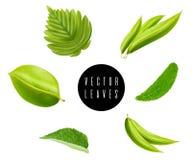 Набор вектора листьев изолированный на белой предпосылке иллюстрация штока