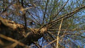 Набор видео- деревьев от дна весной сток-видео