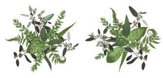 Набор дизайна флористического букета вектора, зеленые лист леса, папоротник, branc иллюстрация штока