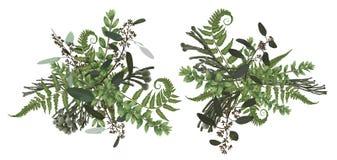 Набор дизайна флористического букета вектора, зеленые лист леса, brunia, папоротник, boxwood ветвей, самшит, эвкалипт Стиль аквар иллюстрация штока