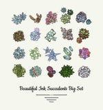 Набор иллюстрации руки Succulents изолированный вектором вычерченный Заводы логотип современных чернил суккулентные, значки, плак иллюстрация вектора