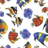 Набор иллюстрации рыб акварели акватический подводный красочный тропический Безшовная картина предпосылки иллюстрация штока